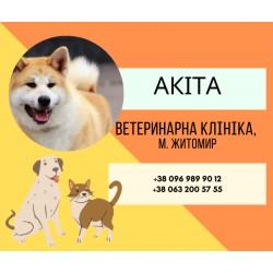"""Ветеринарна амбулаторія """"Акіта"""" Житомир"""