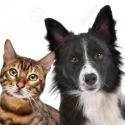 Ветеринарна клініка «Леопольд»
